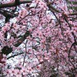 foto_primavera_07