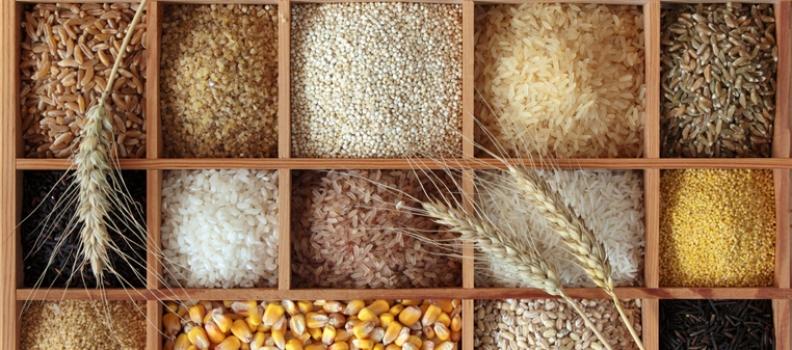 Antinutrientes en la Cocina Energética