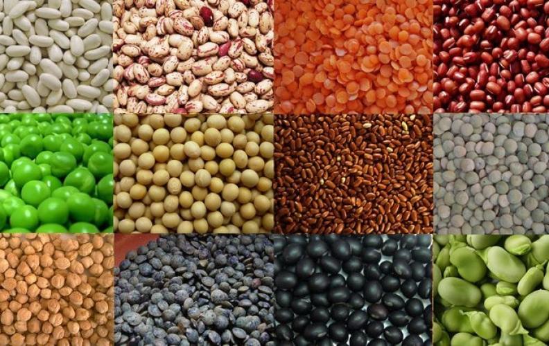 Antinutrientes de los Alimentos