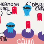 disruptores endocrinos - sumati