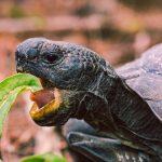 por qué es importante comer lento - sumati